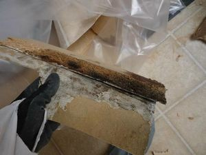 Water Damage Restoration Moldy Debris Removal