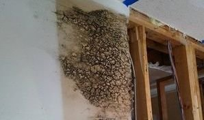 Water Damage and Mold Growing Inside Drywall